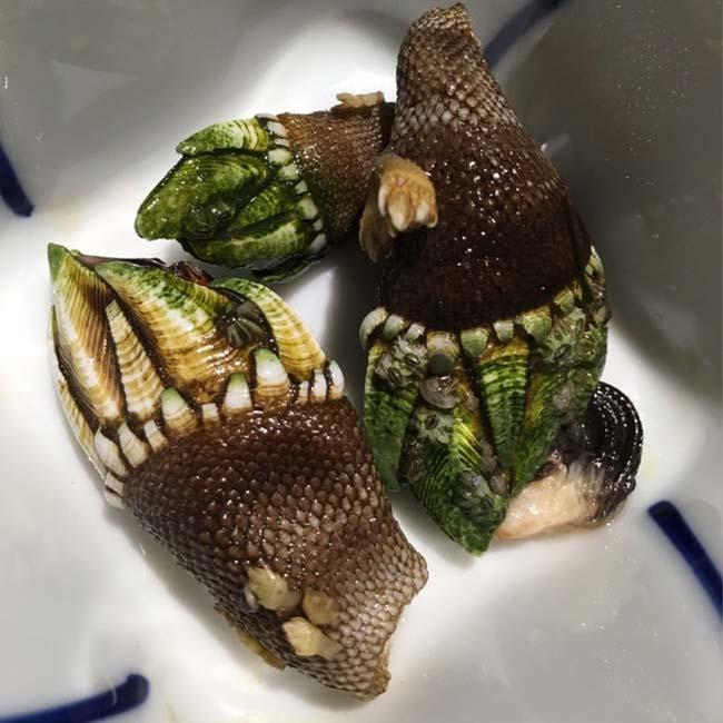 4 loại hải sản nhìn rất đáng sợ, nhưng nếu là người sành ăn sẽ biết chúng rất ngon - 4