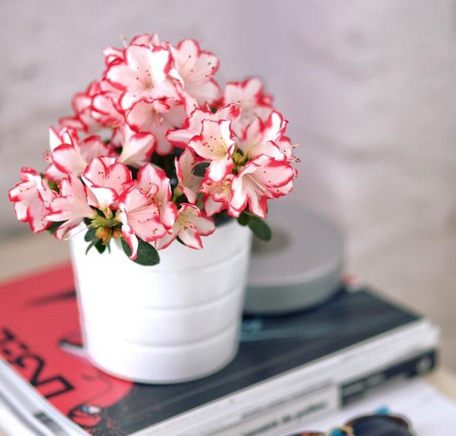 Gợi ý 15 loại cây cảnh bạn nên trồng để vừa làm đẹp nhà vừa tốt cho sức khỏe - Ảnh 15.