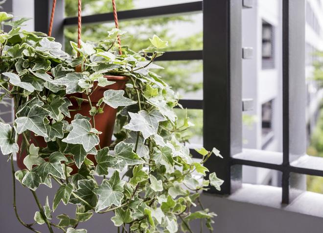 Gợi ý 15 loại cây cảnh bạn nên trồng để vừa làm đẹp nhà vừa tốt cho sức khỏe - Ảnh 7.